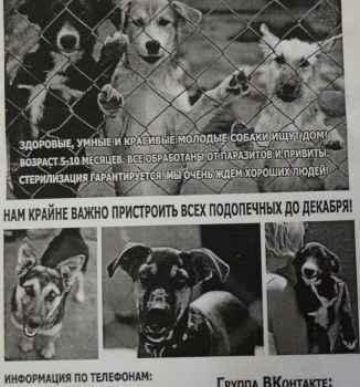В Симферополе хотят закрыть приют для собак