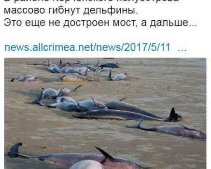 В Крыму из-за Крымского моста гибнут дельфины