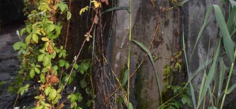Сброс канализации с алуштинских очистных сооружений в реку