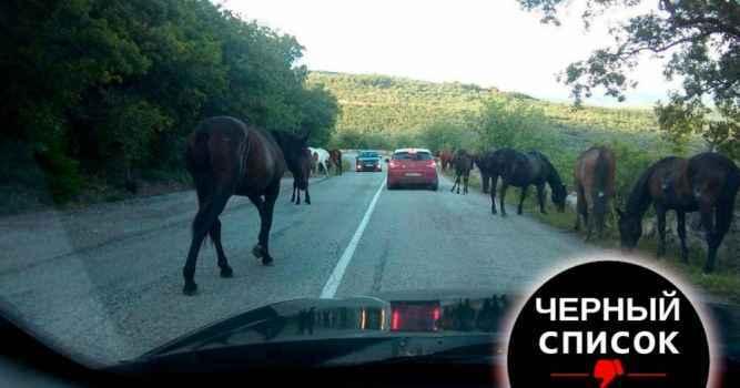 Владельцы лошадей безнадзорно отпускают своих животных, которые создают препятствие на проезжих частях