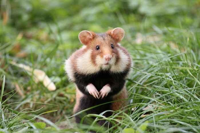 В подъезде на Ялтинской,10 самка хомяка принесла потомство