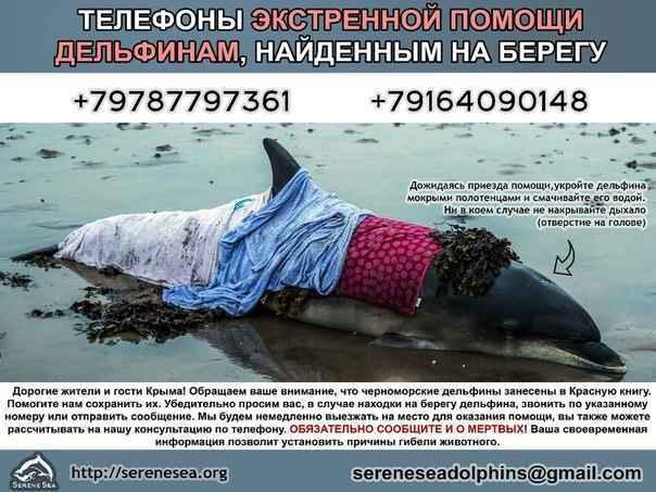 Помогите спасти дельфинов в Крыму!
