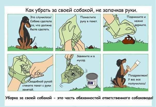 Проблема бездомных животных, взгляд с другой стороны