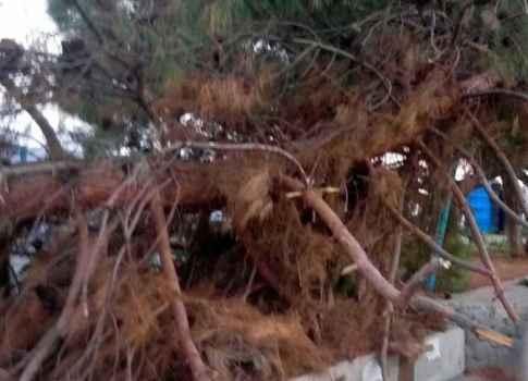 Обломившееся дерево на восточной набережной несет угрозу для прохожих и припаркованных машин