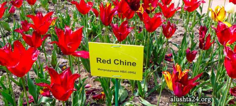 Парад тюльпанов - 2015. Никитский ботанический сад.