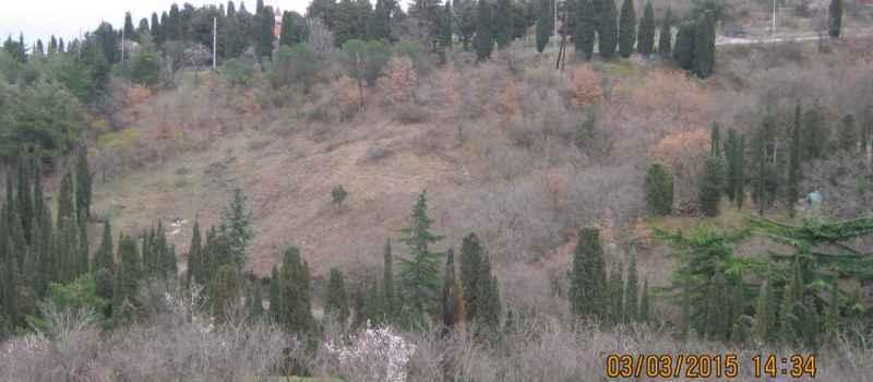 Сбор фото уничтоженных зеленых насаждений в Алуште