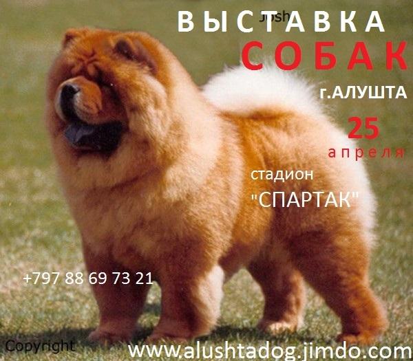 Первая  Всероссийская  выставка собак в Алуште