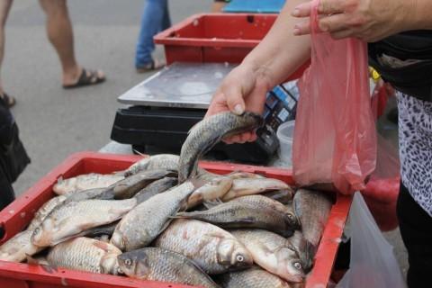 Рыбные нелегалы в Алуште