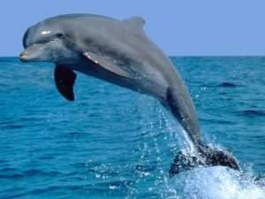Стая дельфинов поддержала эко-флешмоб