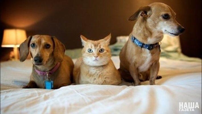 В Крыму принят  закон «О содержании и защите от жестокого обращения домашних животных»