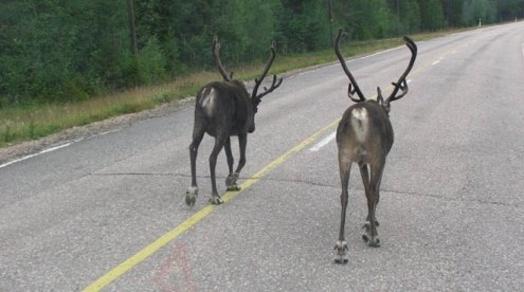 Внимание, водитель! На крымских трассах могут появляться мигрирующие животные!