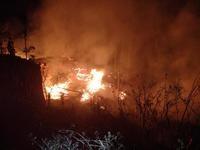 В Партените при пожаре спасатели из огня вытащили павлина