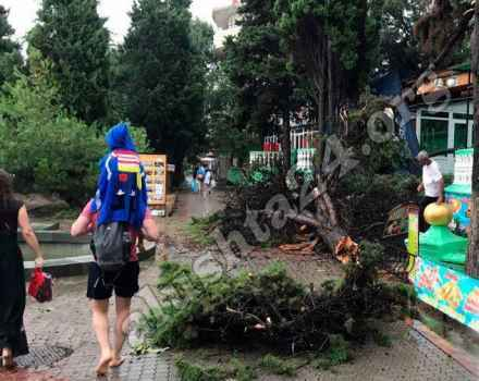 Шквал в Алуште уничтожил деревья на центральной набережной