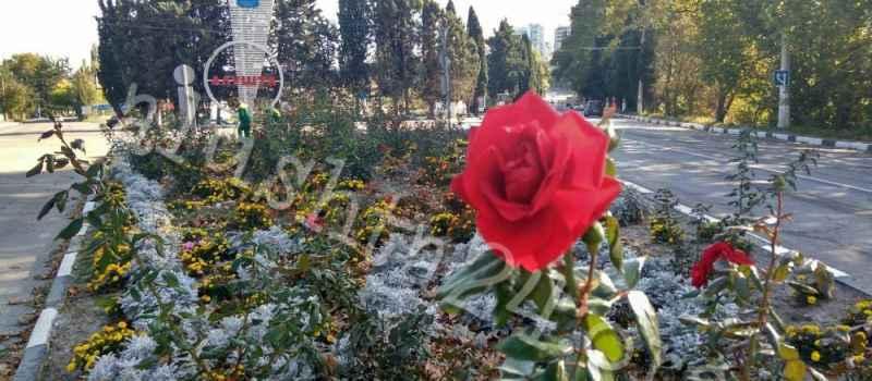 Благоустройство города продолжает ухаживать за клумбами Алушты