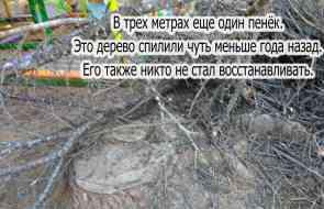 В детском парке продолжают валить деревья