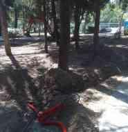 Подрыв корней сосен экскаватором в Приморском парке Алушты