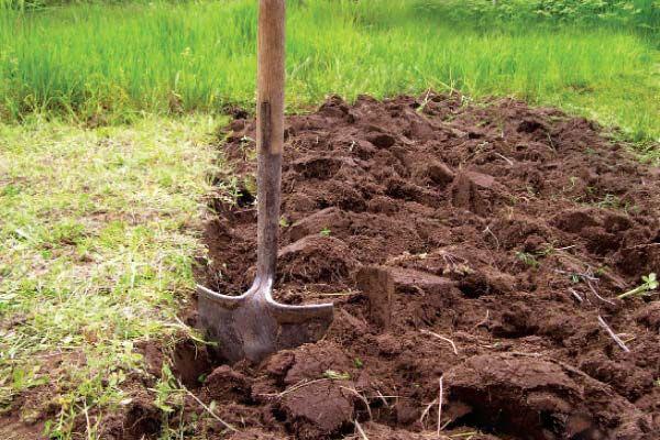 Почва1.jpg