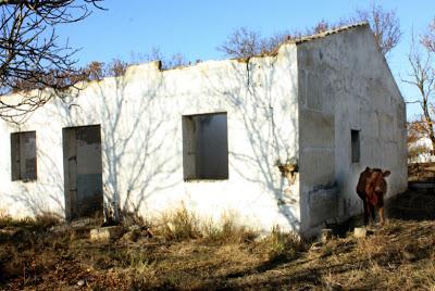 ферма3moloko (3).JPG