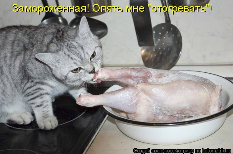 Смотреть смешные картинки с животными и подписями