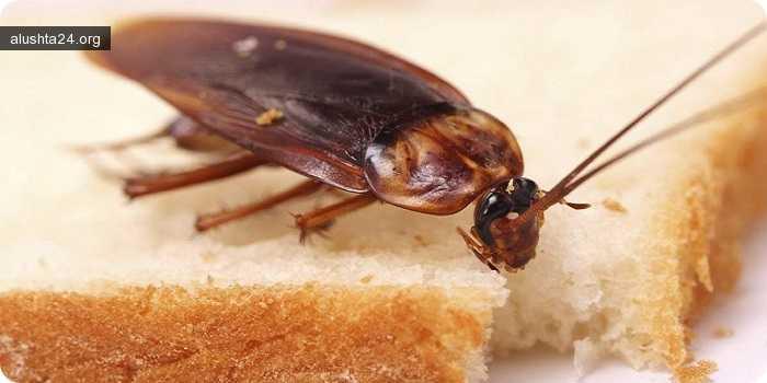 Статьи: Причины появления тараканов в квартире 28 декабря 2017
