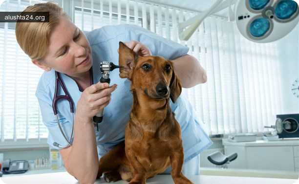 Статьи: Как выбрать ветеринара для своего питомца? 21 февраля 2018