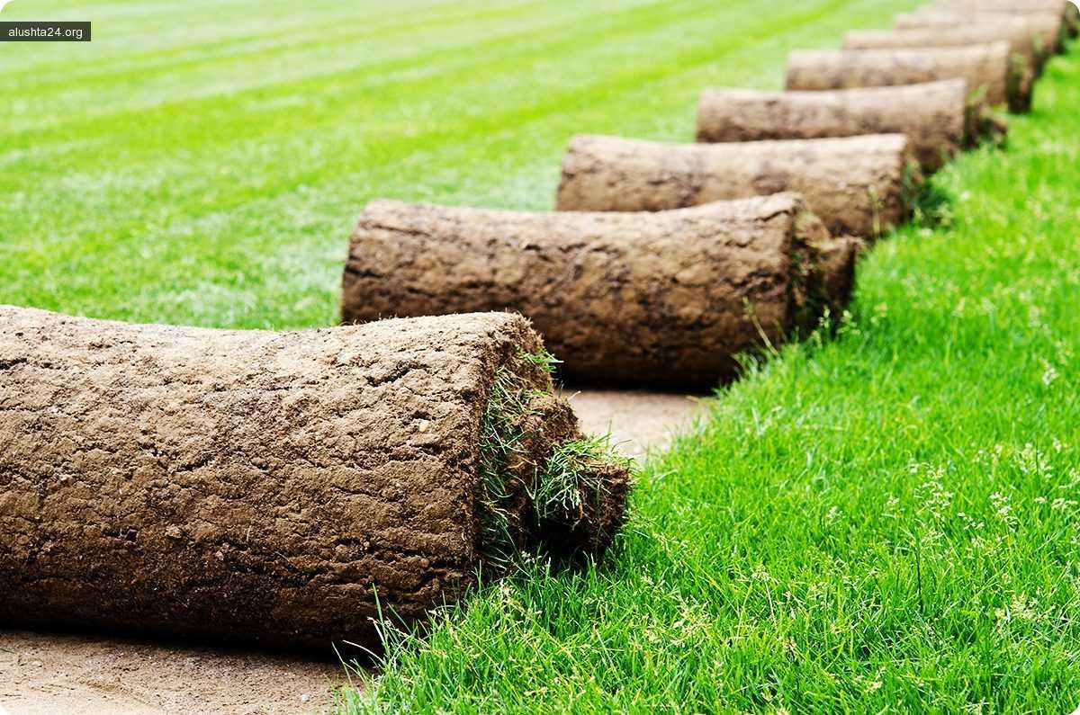 Статьи: Достоинства рулонного газона 3 мая 2018